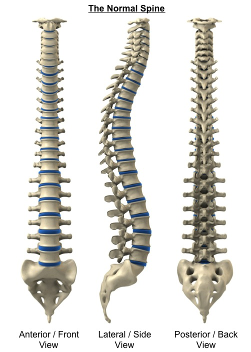 The Normal Spine