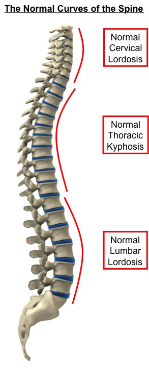 Normal Curves of the Spine