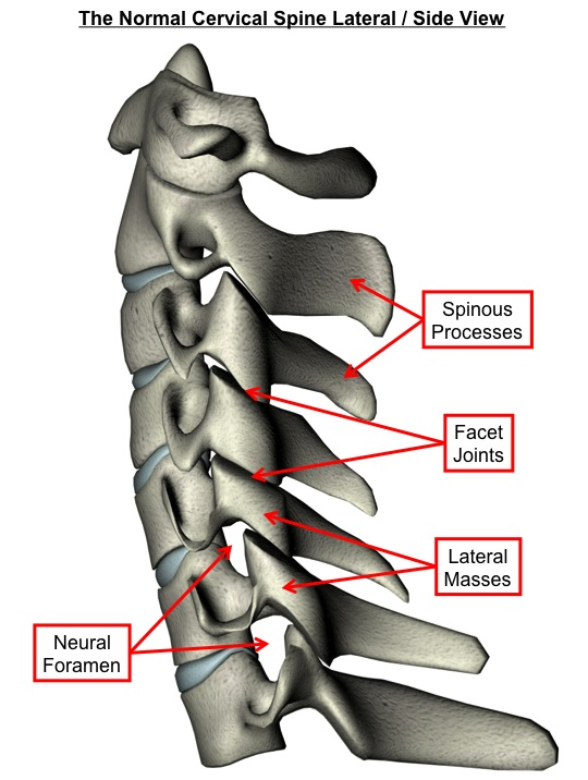 Normal Cervical Spine Lateral