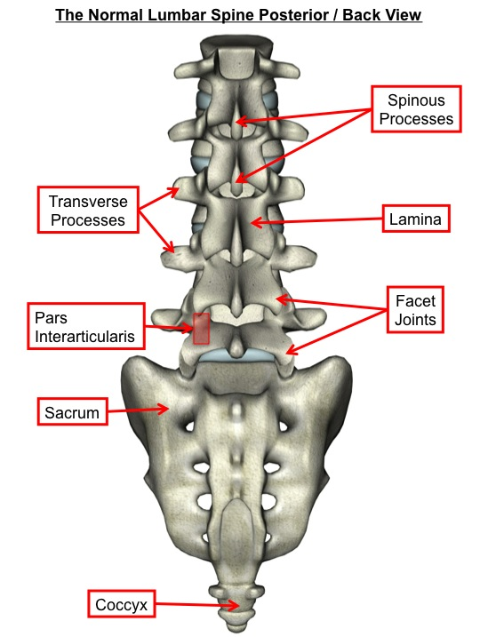 Normal Lumbar Spine Posterior